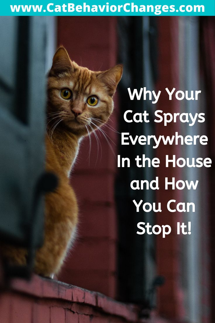 How Do You Stop Your Cat Spraying Everywhere In The House