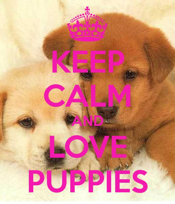 Love Dogs Quotes Wallpaper : KEEP cALM AND LOVE PUPPIES We love animals Pinterest Puppys, Keep calm and love and Keep calm