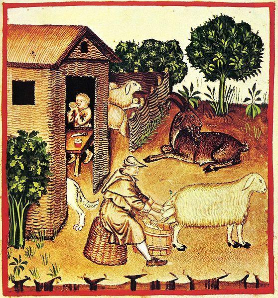 Medieval Milking.