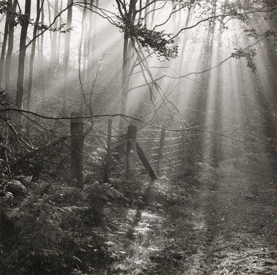 This atmospheric photograph of sunlight streaming through trees was taken by british photographer fay godwin at parkland woods it is part of the secret