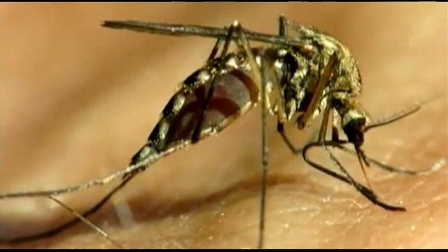 South Carolina's Department of Health and Environmental Control (DHEC) said a total of 11 cases of West Nile Virus have been confirmed in the state, and one person in Anderson County who contracted...