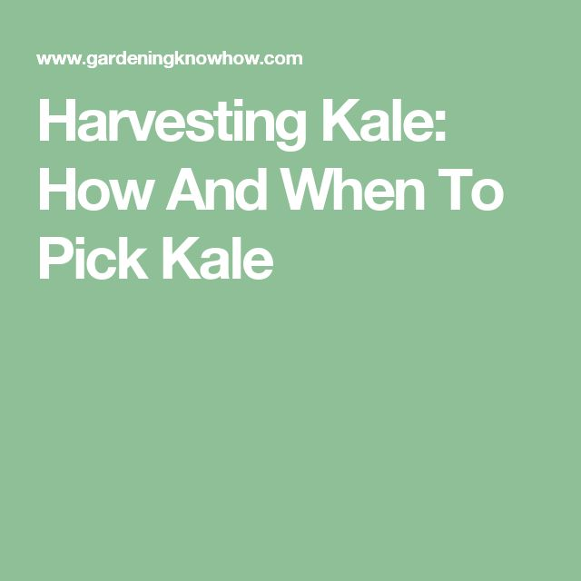 Harvesting Kale: How And When To Pick Kale
