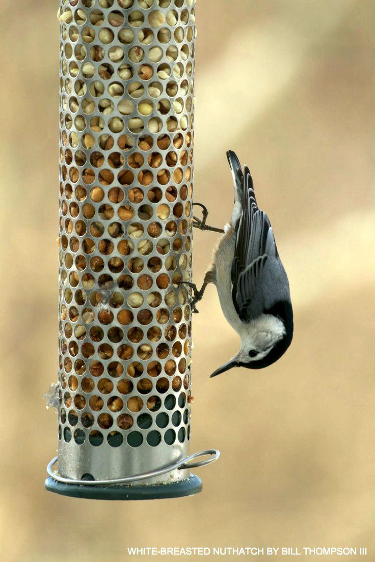 52 best watching backyard birds images on pinterest backyard