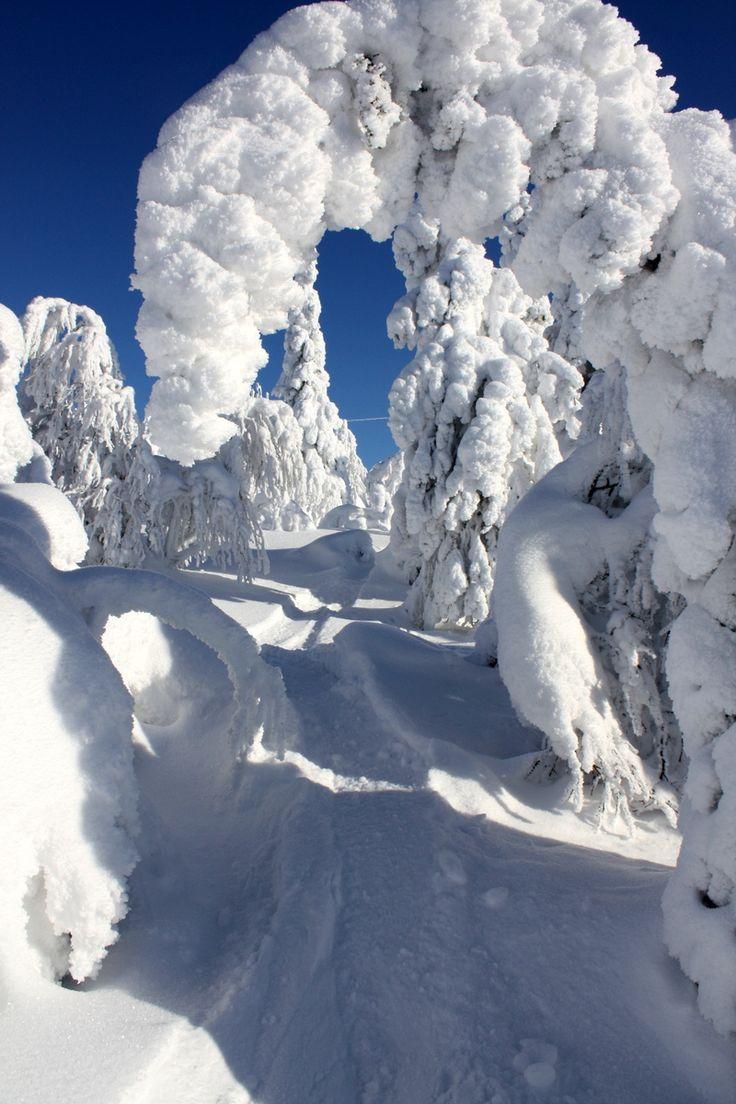 Photo by Tuomas Muurinen, winter Finland (Lapland, I bet).