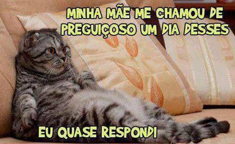 Gato preguiçoso!  Veja mais em: http://www.jacaesta.com/gato-preguicoso/