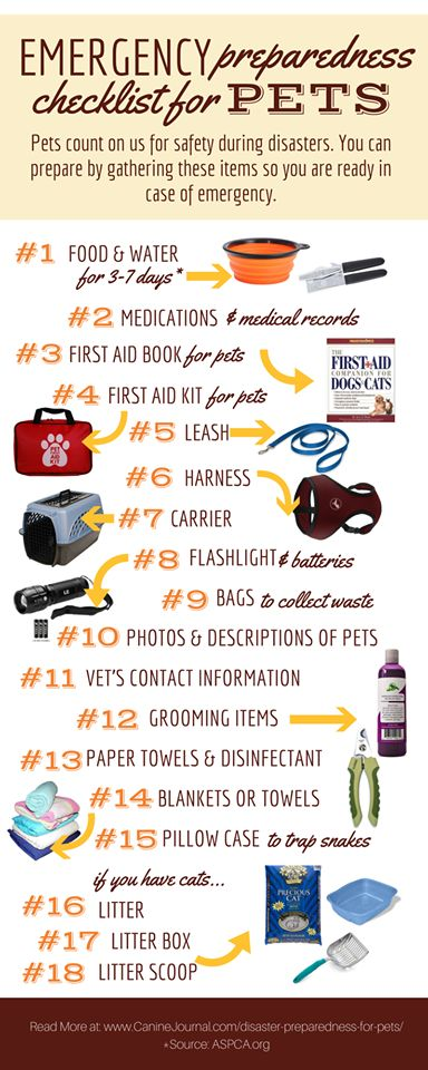 Your Essential Guide to Disaster Preparedness for Pets