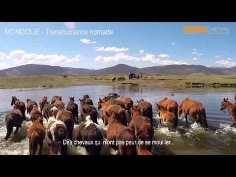 La Transhumance à cheval avc les nomades de Mongolie - http://www.rando-cheval-mongolie.com/voyages/randonnees-cheval/mongolie-transhumance-nomade.html