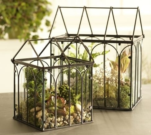 terrariumPlants Can, Ideas, Green Thumb, Potted Plants, Crafts Book, Glasses, Indoor Gardens, Wire Terrariums, Pottery Barns