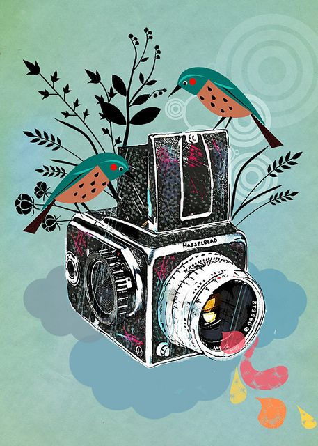 Camera + pássaros