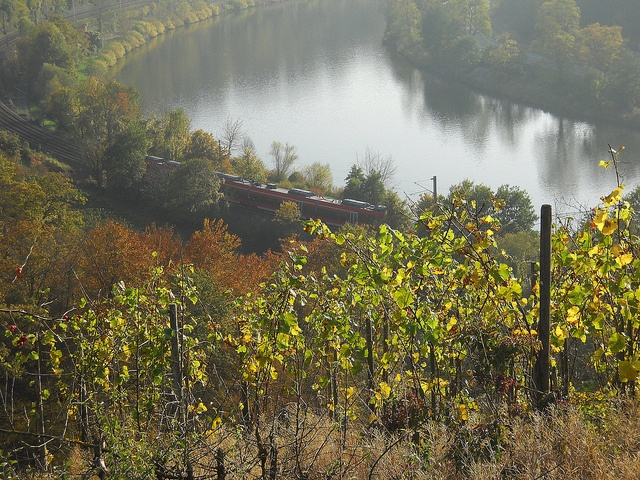 Photo: river Moselle, red train, vineyards, around Palzem-WEHR by Nadia Minic, via Flickr