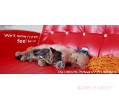 Groovy Pet Supplies & Services #ayopromosi