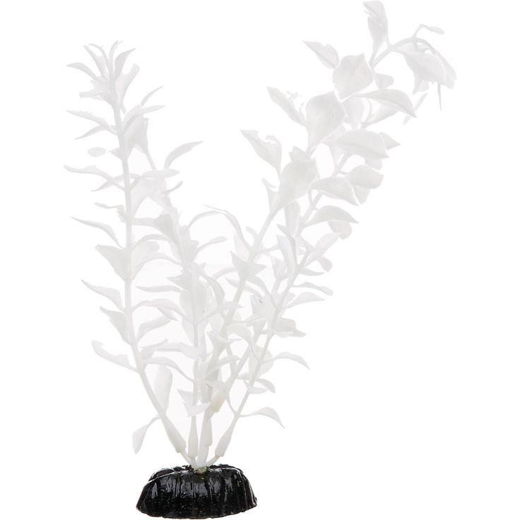 Petco white midground ludwigia aquarium plant tanked for Petco fish tank decor