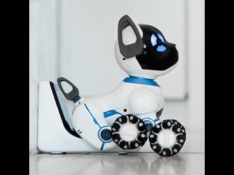 How Does Chip the Robot Dog Work The new notebook computer, tablet or smartphone is very exciting, to be sure, but bringing home a WoWWee CHIP Robot Dog for the first time is a very special experience. It is like bringing homean new puppy for the first time. Robotics have come a long way but nothing compares to the WoWWee CHIP Robot Dog. See http://robotdogs.christmasgifts.co.events/wowwee-chip-robot-dog-2