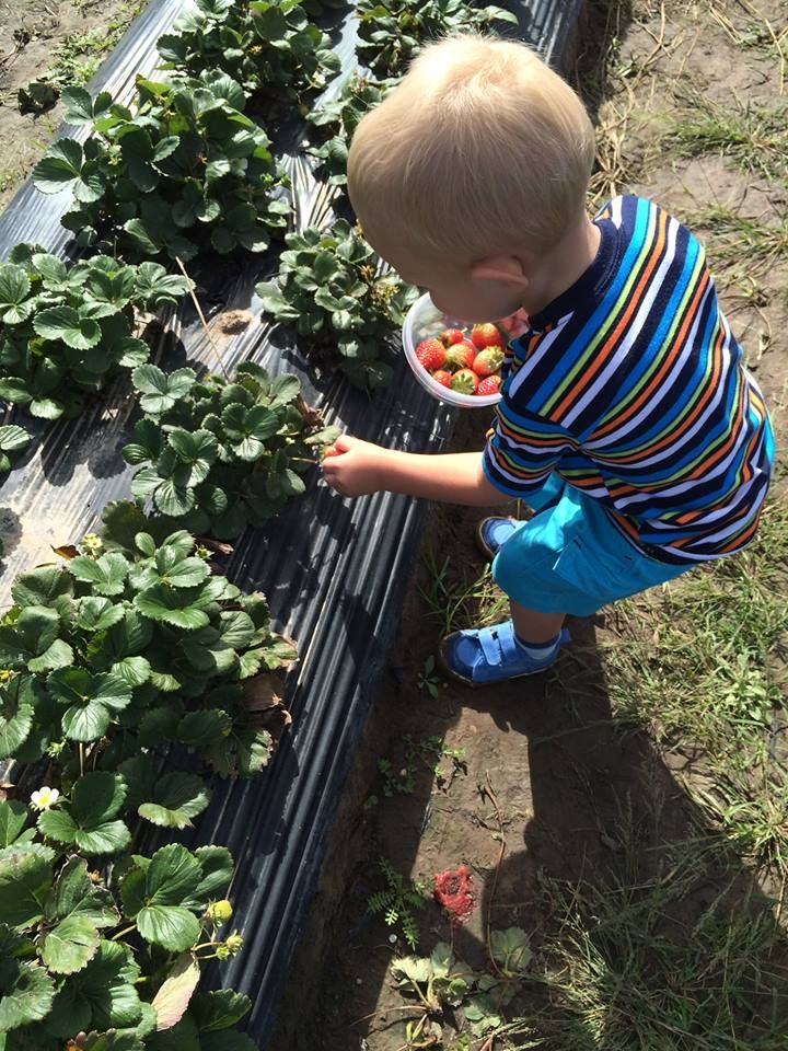 Berry merriment and more at the Redberry Farm