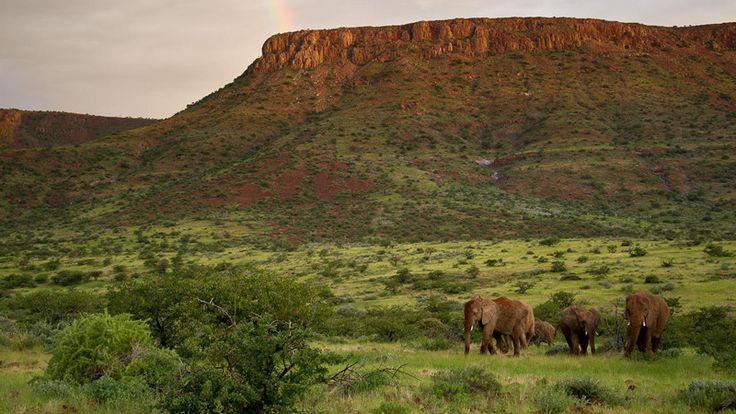 Damarland elephants at Damaraland Camp on our 10 Day Luxury Namibia Safari #luxurytravel #namibia #damaraland