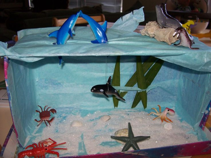 top ocean habitat diorama - photo #12