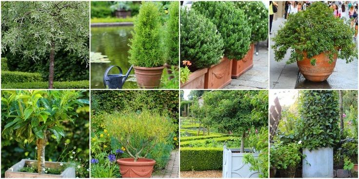 SMÅ TRÆER I KRUKKER - Garden containers with small trees