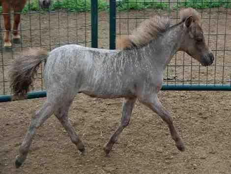 Rare Horse Coats 17 Best images ...