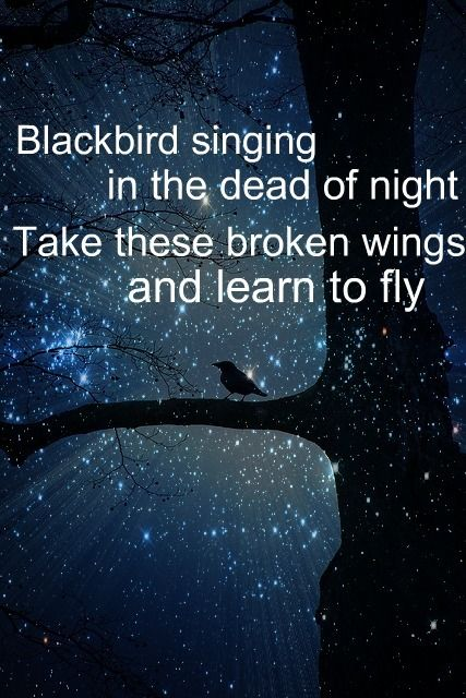 Blackbird singing in the dead of night.   Take these broken wings and learn to fly. ----Beatles