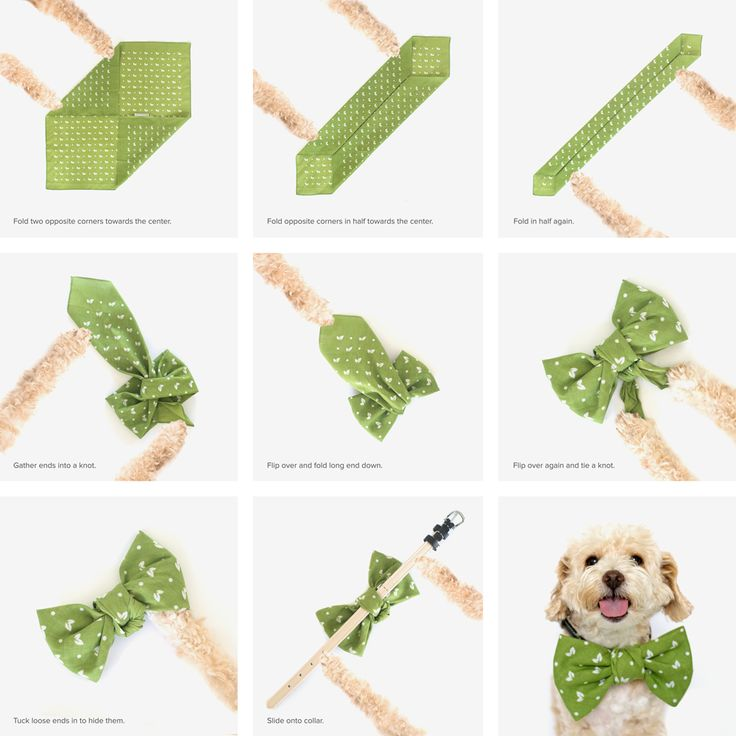 DIY bowtie for dogs using one bandana!