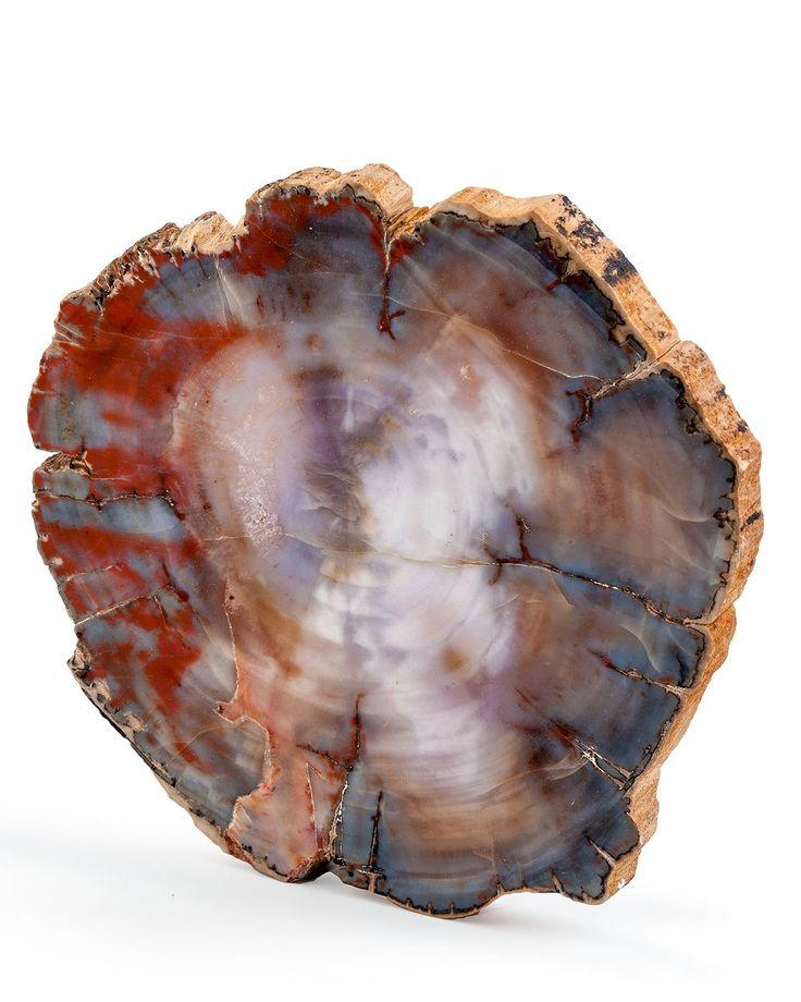 Petrified Wood Slab. Araucarioxylon arizonicum. Triassic, Chinle Formation. Arizona