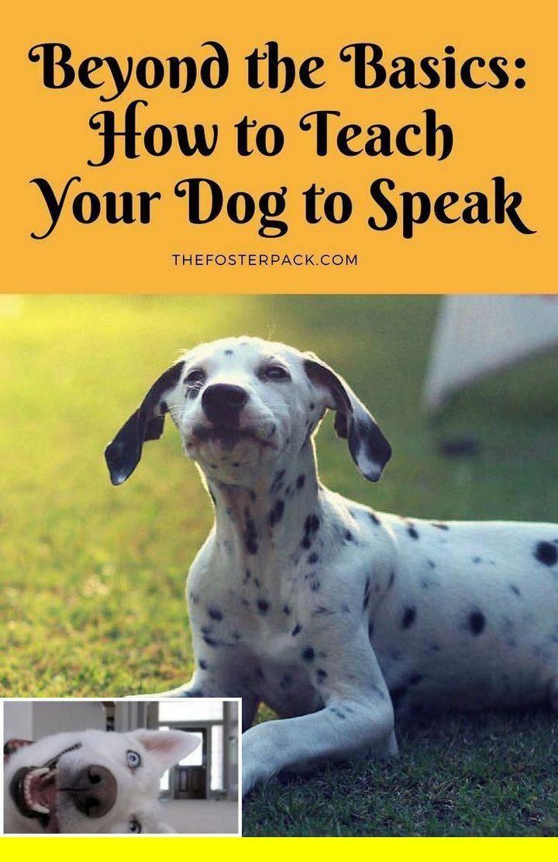 1 Dog Grooming Tricks And Carolina Dog Training Tips Check