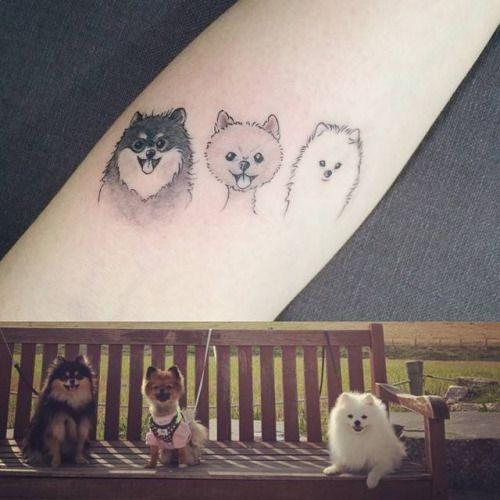 Tatuaje del retrato de tres pomeranias en el antebrazo. Artista...