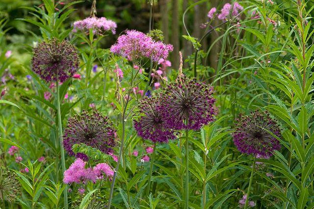 Five Oaks Cottage Garden | Flickr - Photo Sharing!