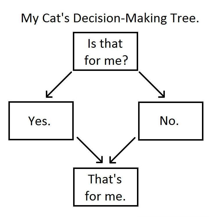 Cat decision-making tree.