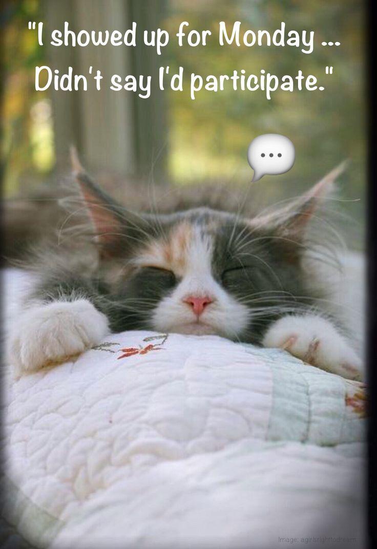 Happy Monday Monday humor animal funny cute cat