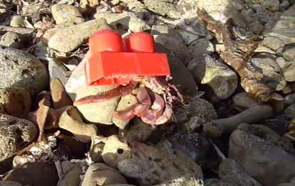 un bernard l'hermite a un lego pour coquille [video] - http://www.2tout2rien.fr/un-bernard-lhermite-a-un-lego-pour-coquille-video/