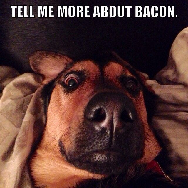 697dc086d548307225b1d701da95d6ab bella bacon the 25 best bacon memes ideas on pinterest funny vegan memes
