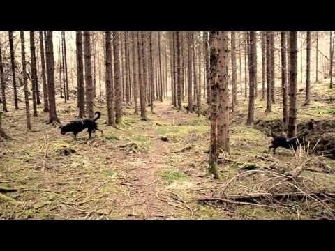Fuglekvitter i skogen (Foto Seljordslia)