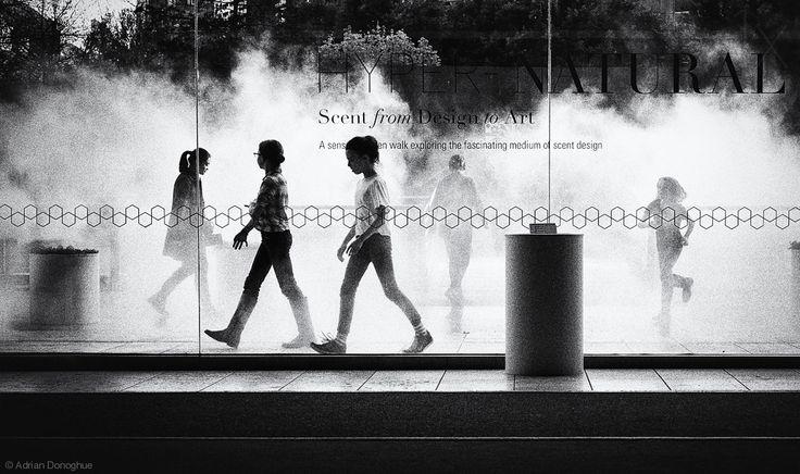 Adrian Donoghue The fog