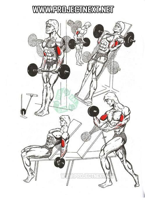Biceps in spanish