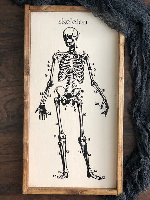 Skeleton Decor - Skeleton Decoration - Halloween Decor - Halloween - halloween decorations skeletons