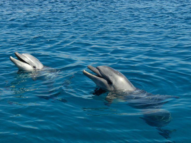 Dolphin Reef in Eilat, Israel