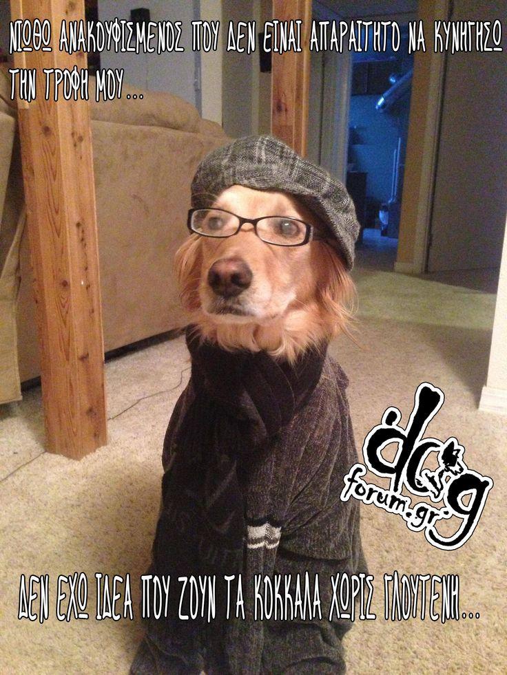 #glutenfree #hipster #dog