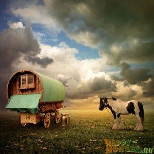Старая цыганская телега и лошадь тинкер
