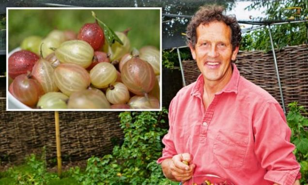 The easiest berries you can grow Gooseberry bushes thrive best when theyre neglected says MONTY DON making them the perfect plant for the time-poor gardener | Daily Mail Online