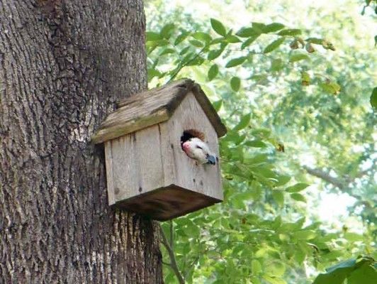 Darcy Van Heuveln of Cary, North Carolina, shared this funny photo of a neighborhood opossum napping in her birdhouse. A few years ago, squirrels overtook the house, enlarging the entrance hole, and now its main resident seems to be this critter that Darcy named Rufus. country-magazine.com