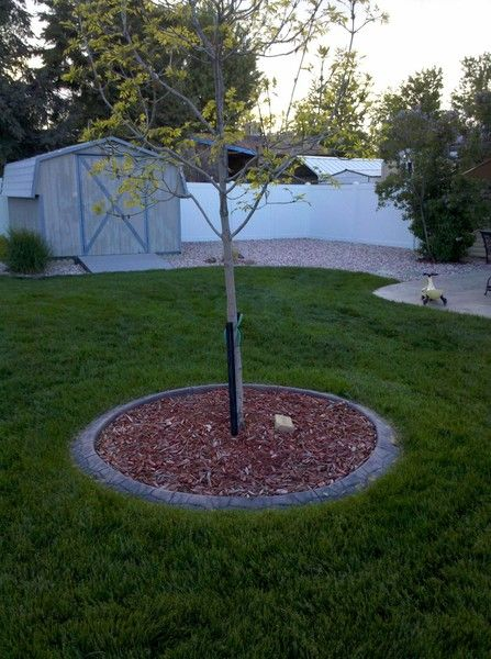 Tree Ring Decorative Landscape Borders Installer Of