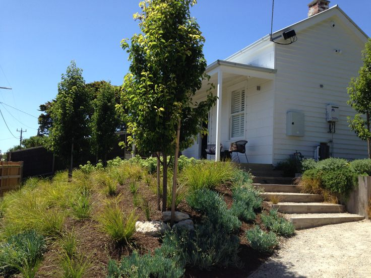 Coastal cottage garden. Ornamental pears with underplanting of succulents and grasses. Sorrento House 2. www.marktraversla.com