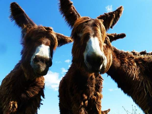 Photo du GEOnaute : thb prodTrouvez la meilleure assurance pour votre animal de compagnie grâce à ce comparateur en ligne
