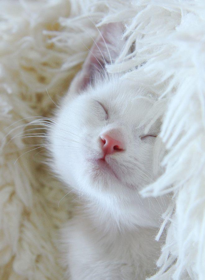 Sweet Dreams by Dorota J. <3