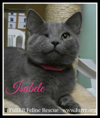 Isabel - Adopted...