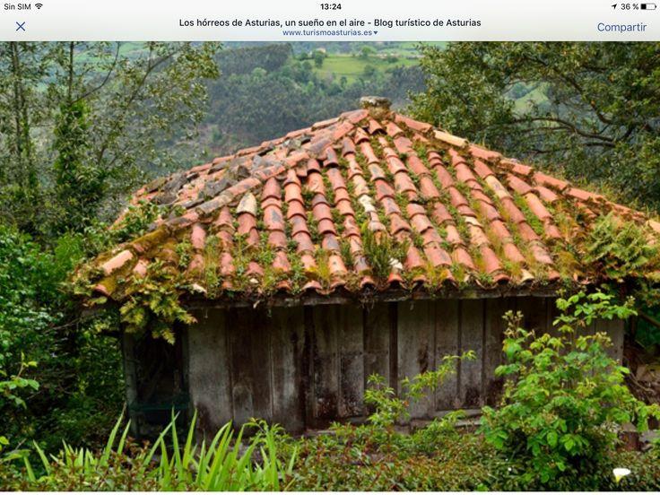 Herrero asturiano. Norte de España