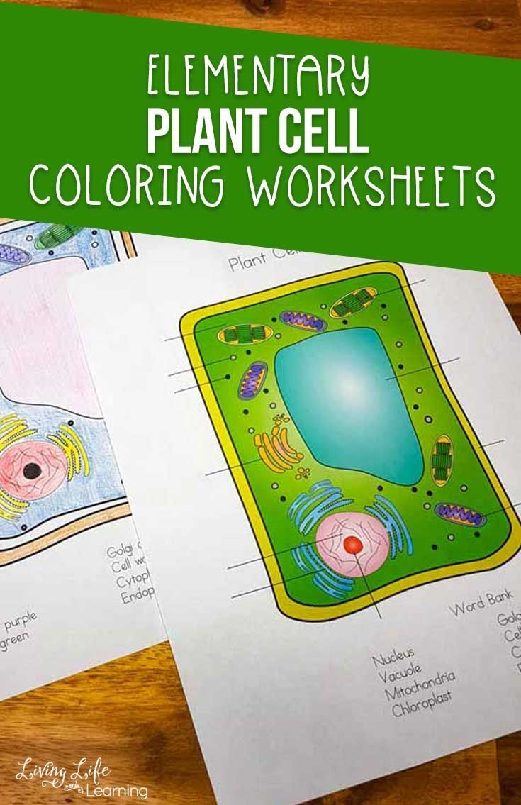 Plant Cell Coloring Worksheet Plant And Animal Cells Plant Cell Lesson Color Worksheets [ 1135 x 735 Pixel ]