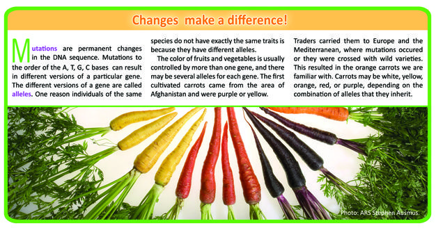 The effects of genetic mutations in carrots. History of Agricultural Biotechnology: How Crop Development has Evolved - http://www.PaulFDavis.com health coach for wellness body-mind-spirit and global food consultant (info@PaulFDavis.com)