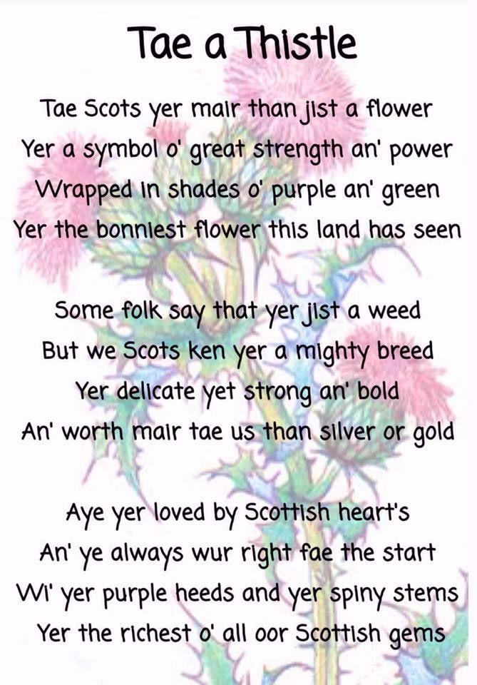 An ode to The Thistle.  Scotland's national symbol.